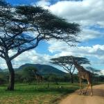 The Story of Africa - Day Tours