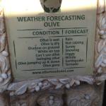 Weather Forecasting Olive