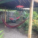 Photo of Santuario Hibiscus