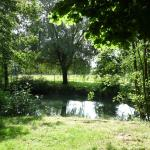Le bord de l'étang
