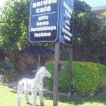 Zebra in kingscliff