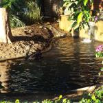 Black Swans in the garden
