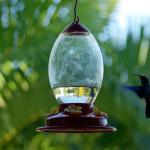 Envol du colibris