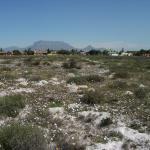 Bothasig Fynbos Nature Reserve