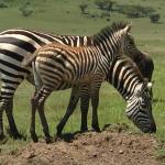 Safari in Tanzania with Ernest