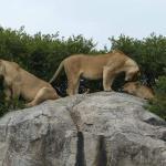 Serengeti Safari with Ernest