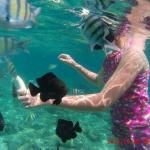 My daughter feeding the fish a banana while snorkeling in Phi Phi