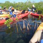 Cayman Kayaks Foto