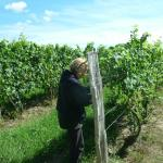 Visiting a vineyard