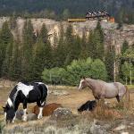 Photo de Hawley Mountain Guest Ranch