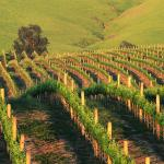 Beautiful Valley Vineyards