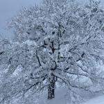 Amazing snow