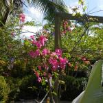 Lovely flowering trees