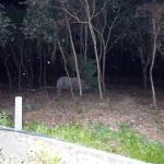 rhino spotted in grounds of lodge at night.
