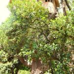 tree house corbett hotel