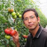 tomatoyasan