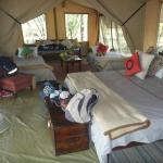 Foto de Leleshwa Camp