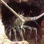 Las Galeras Divers Foto