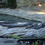 Gator Springs inside the Hotel