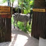 Zebra Welcomes you