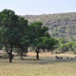 Photo of Olievenfontein Private Game Reserve