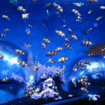 Hunstanton Sea Life Sanctuary
