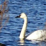 Wildlife at the lake near cabin