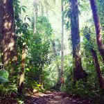 jungle trail to playa chiquita