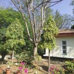 Cottage amongst trees