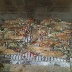 langoustes grillées