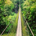 Pont suspendu : 127 mètres de long, 40 mètres de haut.