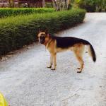 Friendliest guard dog around (and I am afraid of dogs).