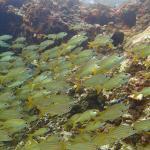 Sous l'eau de la mer