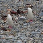 Nur 8 km vom Hotel kann man Pinguine sehen
