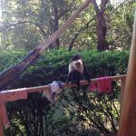 Monkeys visited most mornings