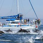 Our catamaran Manute'a and a Mega-pod of Dolphins