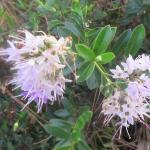 Nice Flowers, Chateau Julien, Carmel, CA