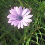 Nice Flowers, Chateau Julien Winery, Ca