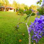 Цветы и бунгало