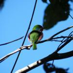 Inheemse vogel/Native bird