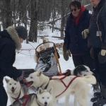 Wolfsong Adventures in Mushing Foto
