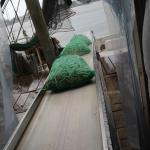 Unloading the shrimp