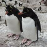 Isla Pinguinos