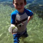 We Found a Sea Urchin