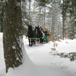 Perfect Day for a Sleigh Ride!