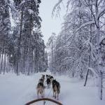 On the dog sled