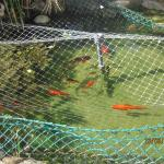 Club Aquarium