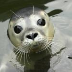 The Scottish SEA LIFE Sanctuary