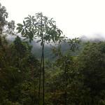 Locos por el Bosque