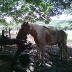 Ranch Anse Macabou